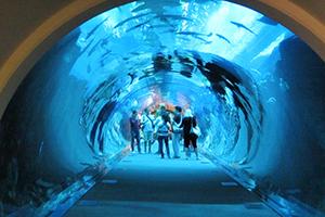 Dubai mall Aquarium 2