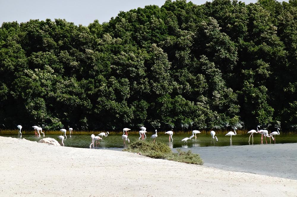 Naturschutzgebiet 1
